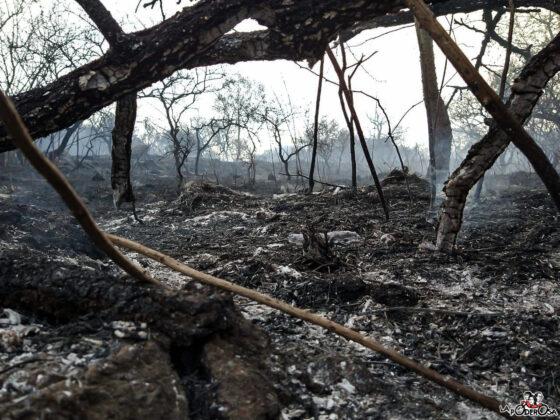 Incendios Córdoba 4
